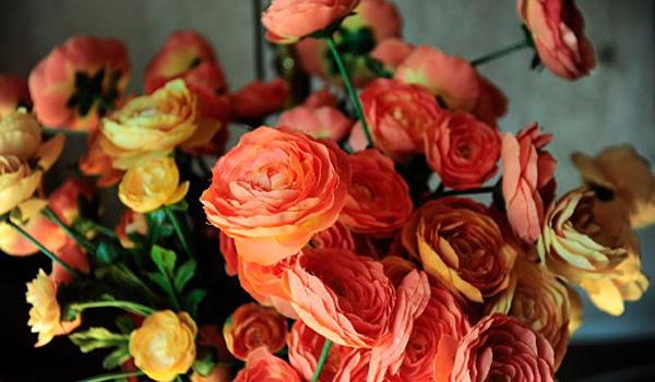 Close-up Blumen. Fotograf Koos Daniels.